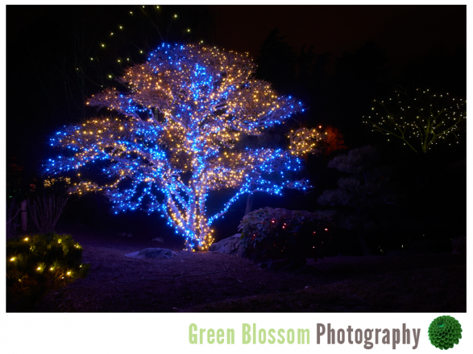 Blossoms Of Light Denver Botanic Gardens Wedding