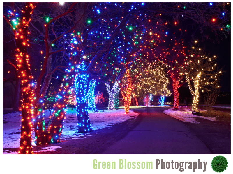 Trail Of Lights Denver Botanic Gardens At Chatfield Wedding Photography Boulder Green