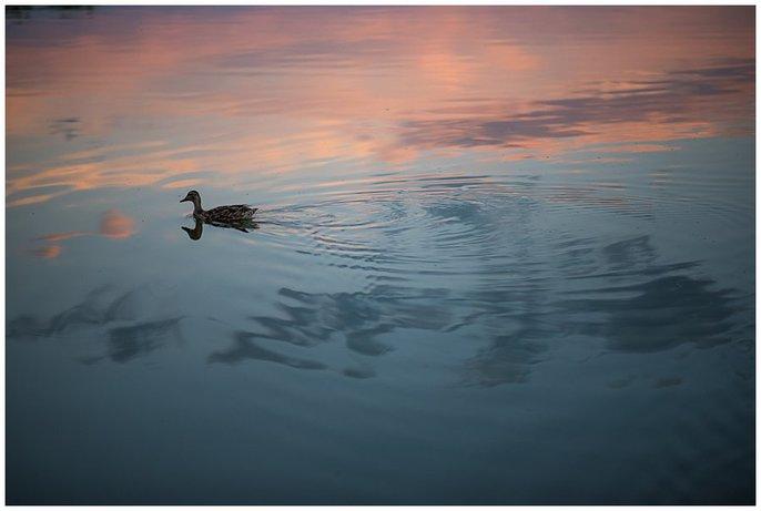 sunset photo with duck wash park Denver photo