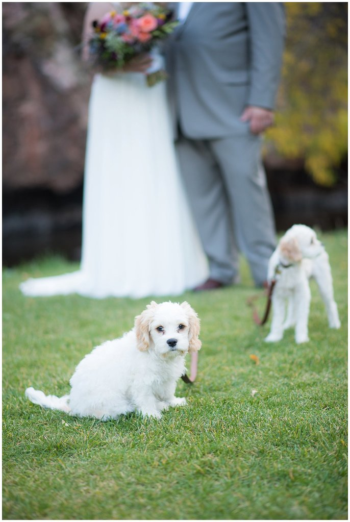 couple with cute dogs Lyons river wedding photo