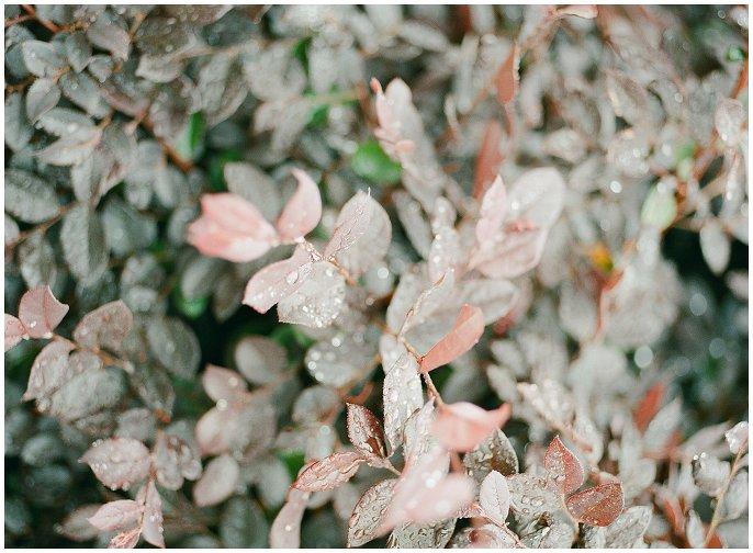 leaves on medium format film photo