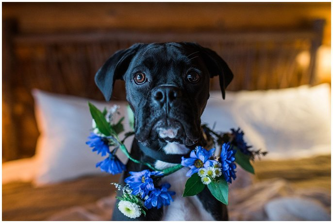 dog with flower crown wedding photo