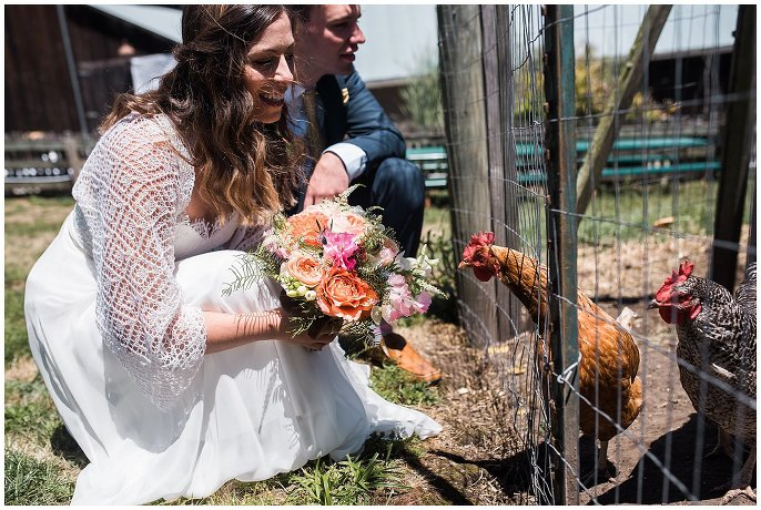 farm wedding with chickens photo